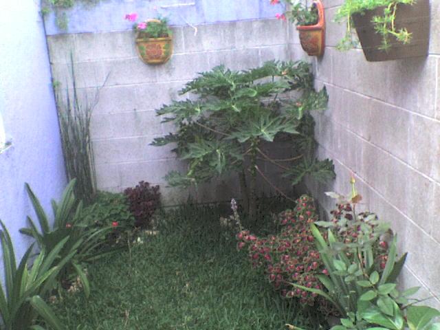 Foro de infojard n for Ideas para mi jardin