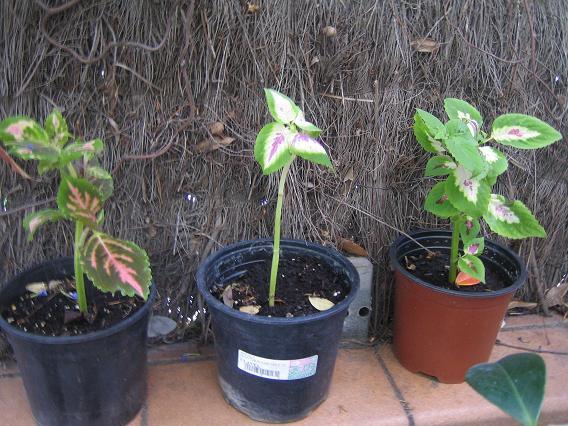 Tengo una terraza soleada y la quiero hacer habitable en - Cuando podar las hortensias ...