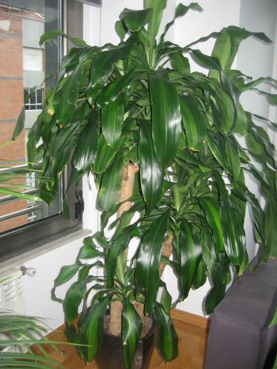 Venta de plantas de interior espectaculares en oviedo - Plantas de interior baratas ...