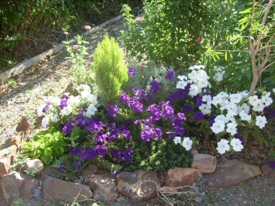 Rincones y plantas de mi jard n for Plantas para mi jardin